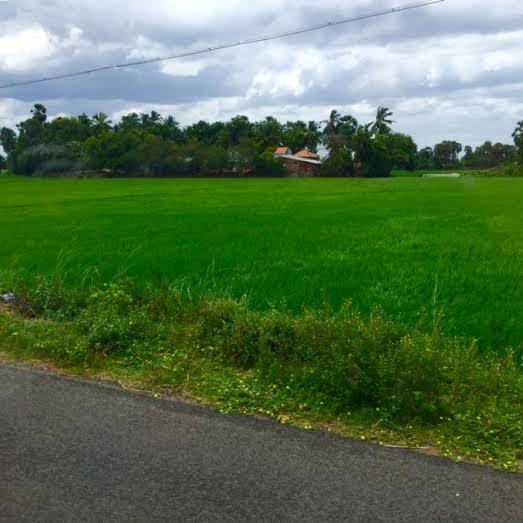 greenfields1